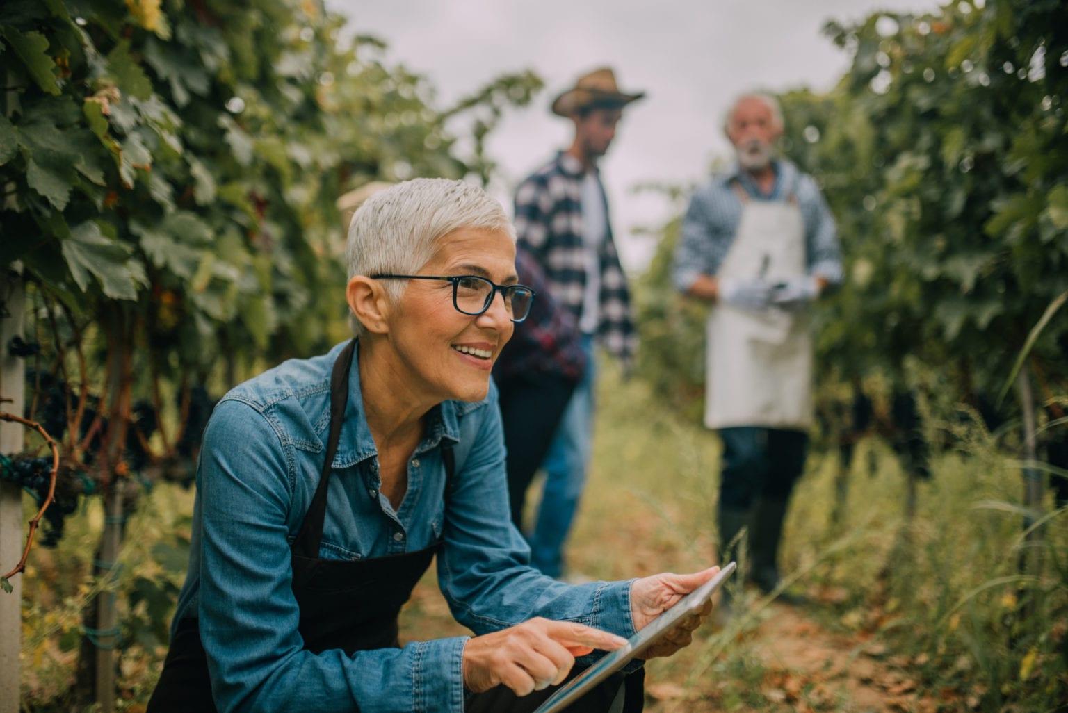 winery marketing through automation